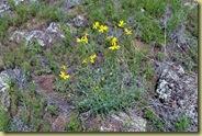 Lava Flower-1
