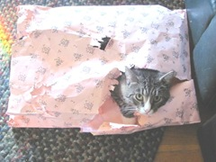 Tuffy kitty in a pink bag 11.2011