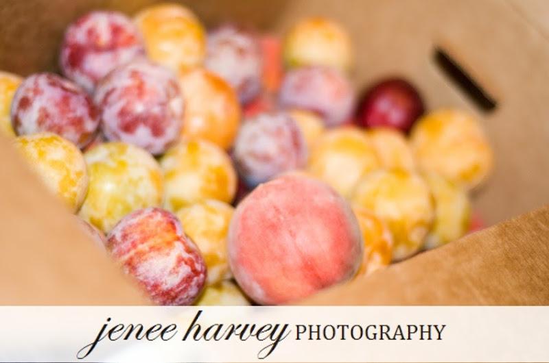 picking fruit-7