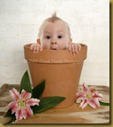 Flower_Pot_Baby_Small12
