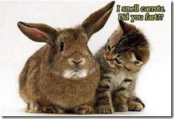i smell carrots