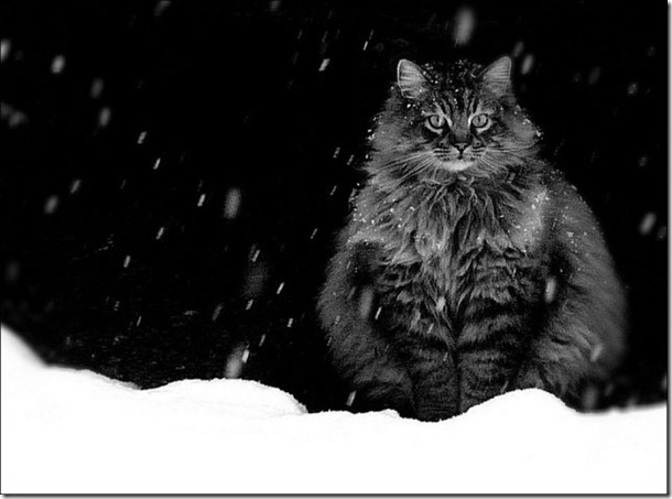 cats-play-snow-24