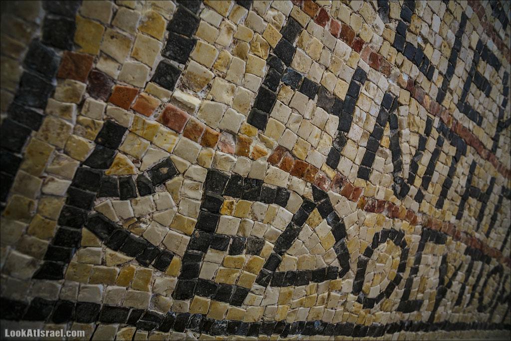 Мозаики от «Доброго самаритянина» (israel  путешествия иудея и самария и интересно и полезно выставки музеи фестивали  20130215 good samaritan mosaic 003 5D3 8399)