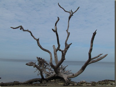 dead tree at eg simmons beach park