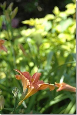 12.06.03 garden 011