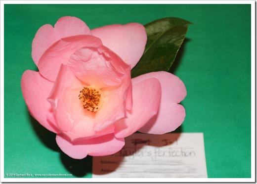 140302_Camellia_Society_Sacto_Show_036