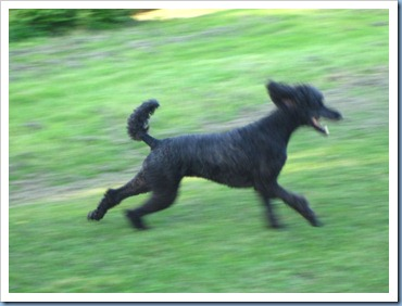 20110921_dogs_002