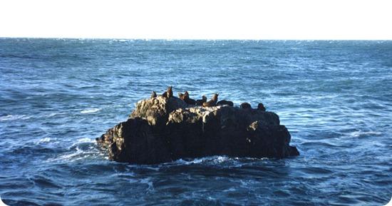 Cabo_Blanco lobos marinos