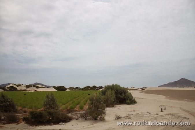 Sin palabras. Desierto y plantaciones. Increíble contraste.