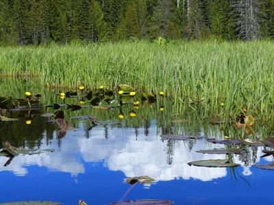 14 Trillium Lake 031