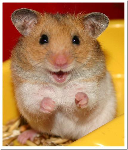 hamster grande imagen (8)