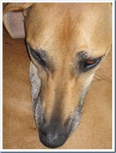 20110930_dogs-futon_004