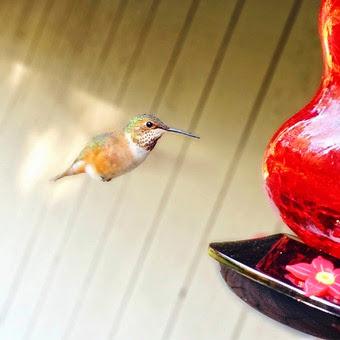 HummingbirdIPhone