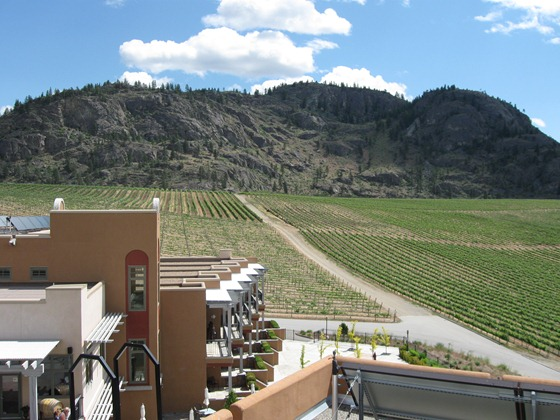 Burrowing Owl Vineyards