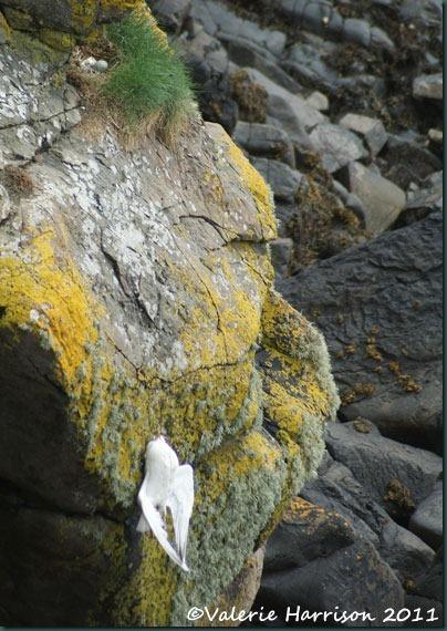 14-gull-and-nest