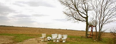 five_toilets_in_field