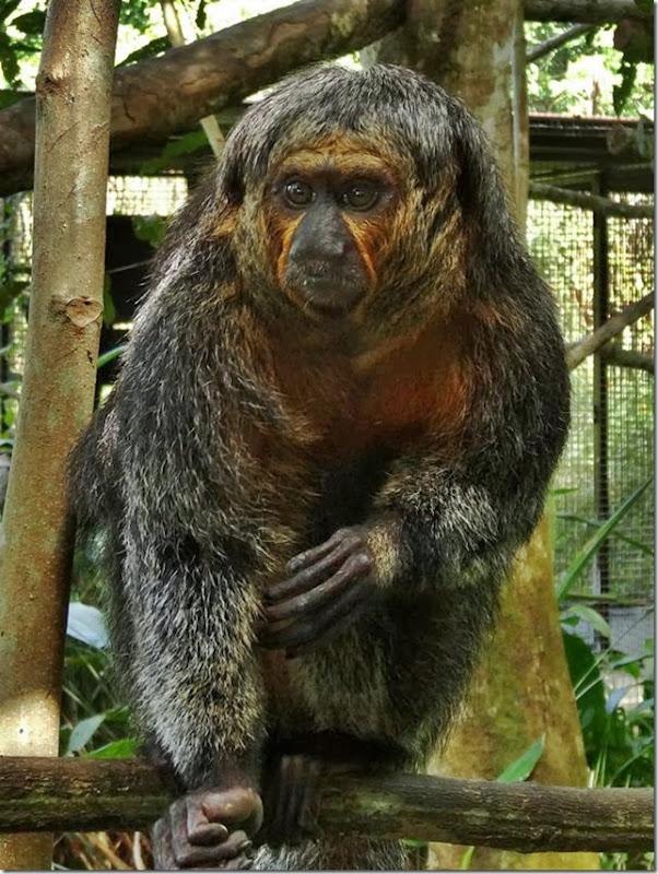 Cayenne_Zoo_DSC08152