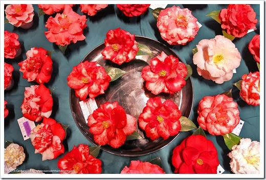 140302_Camellia_Society_Sacto_Show_027