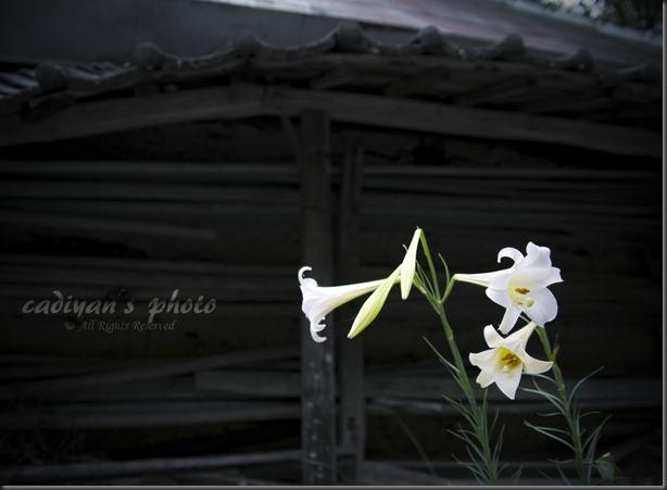 D700_2012-08-29_008