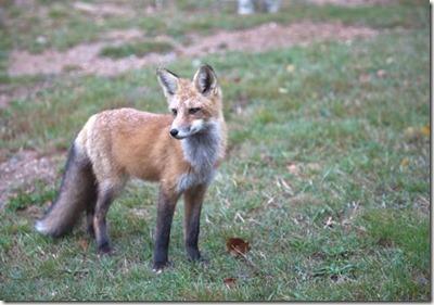 foxSM