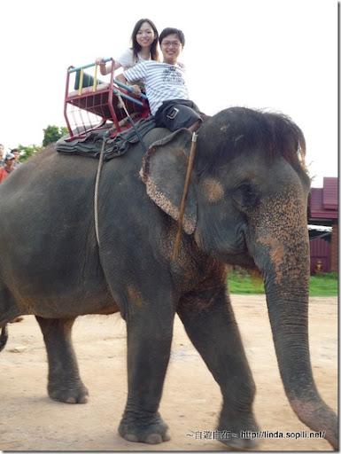 泰國芭達雅-騎大象5