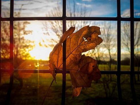 2. Hojas secas en la ventana