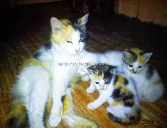 anak kucing dan ibunya
