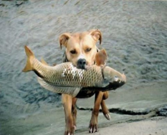 fishing with man's best friend