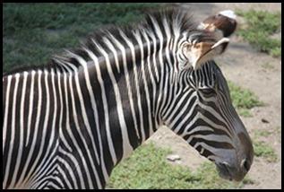 Zoo5 031