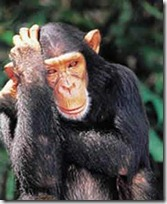 monos piensan blogdeimagenes (6)