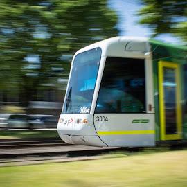 Melbourne Tram by Jane McMenamin - Transportation Other ( moving, transport, melbourne, speed, tram )