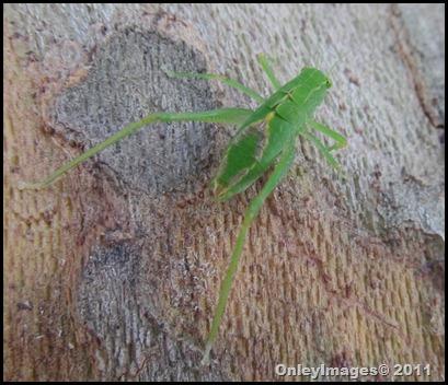 grasshopper (11)