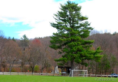1. Soccer field-kab