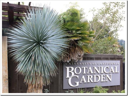 121228_UCBotGarden_Yucca-rostrata_02