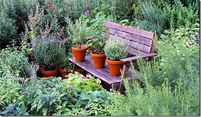 Jardim de plantas medicinais