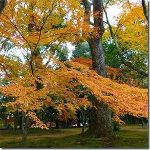 Outono no Japão Autora Fernanda Souza
