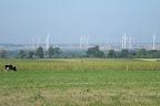 Wiatraki do robienia prądu w kontakcie. Natomiast po lewej krowa do produkcji mleka w kartonie.
