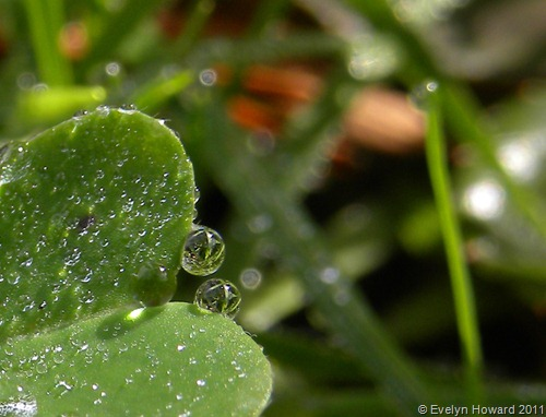 Water drops © Evelyn Howard 2011
