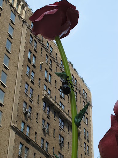A beetle ascends one of the tallest blooms.