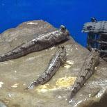 sea creatures at the Shinagawa Aquarium in Shinagawa, Tokyo, Japan