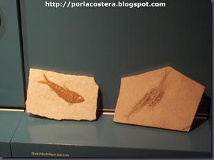 fosiles (4)