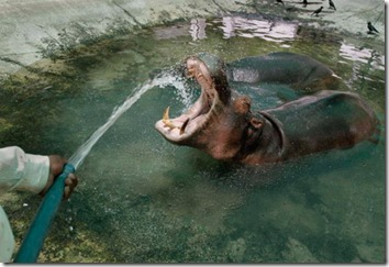 funny pictures of animals doing funny things (1)