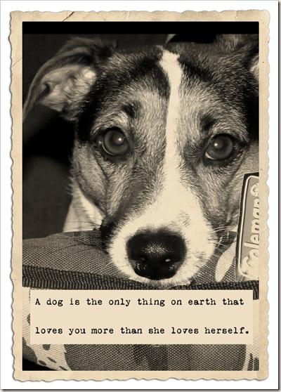 dog love you