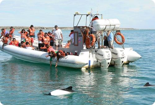 delfines avistaje