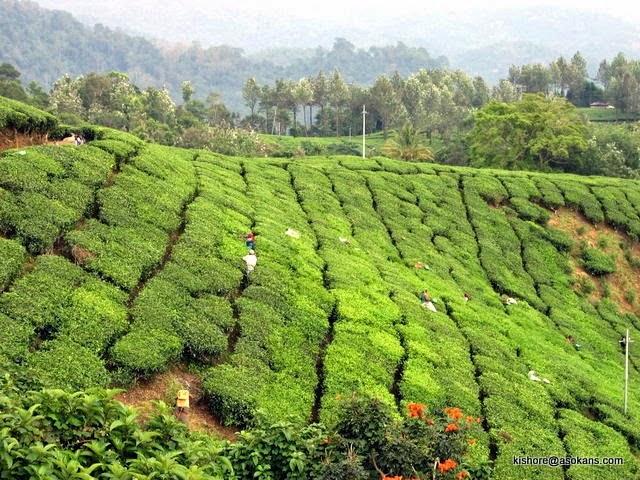 1-Kerala-200400371
