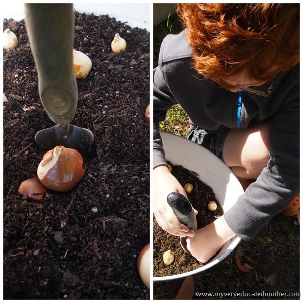 plantingbulbswithkids  #fall #gardening #gardeningwithkids