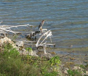 Wasservogel_Salt_Pond