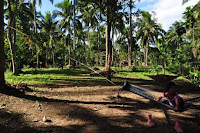 pinoyecofarm november_0090.JPG