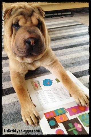 Holly læser