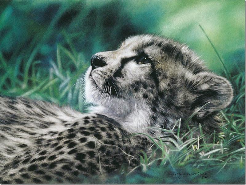 animales tiernos (14)